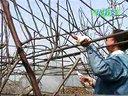 梨树修剪技术视频