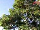 """【新广行风热线-昌吉特别活动视频-木垒县集中治理机关单位干部""""吃空饷""""问题成效显著】"""