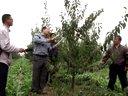 国庆逛果园纪实之8李子树主干形整形修剪技术介绍演示视频