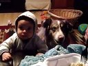 汪星人说mama与宝宝抢食物  被宝宝暴打
