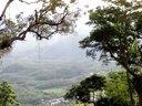 海南长臂猿 - 敏捷的爬树高手