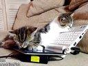 家有萌宠 可爱喵星人学电脑