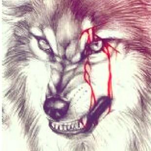 血狼高清霸气头像
