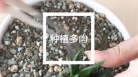 多肉植物DIY种植享受DIY乐趣视频