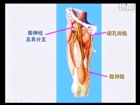 解剖教程第七部分(脊神经第二部分;脑神经;内脏神经)