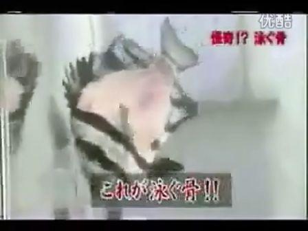 [乱入]日本残忍吃鱼法:只剩鱼骨放回鱼缸供欣赏
