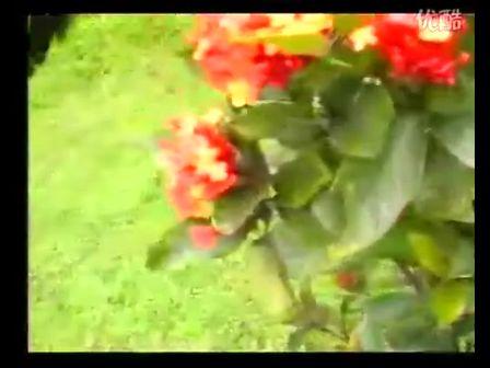 【視頻 VIDEO】廣東音樂 喜慶樂章『花開富貴』