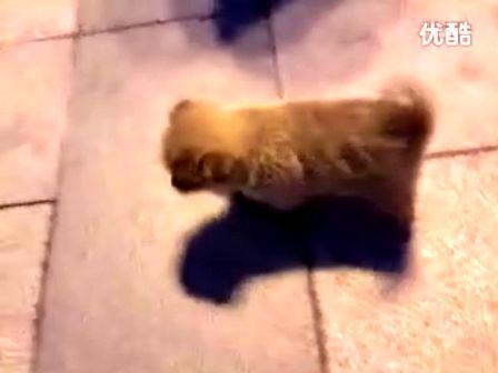 路上遇到超萌可爱小狗狗