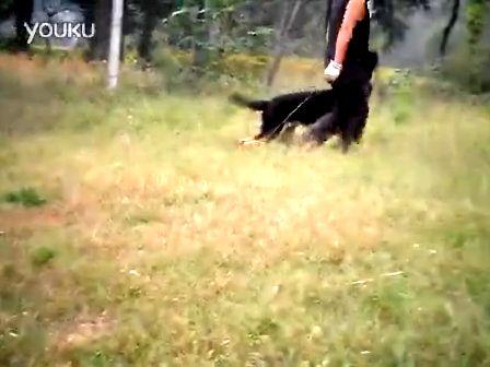 重庆灯塔犬舍的频道-优酷视频