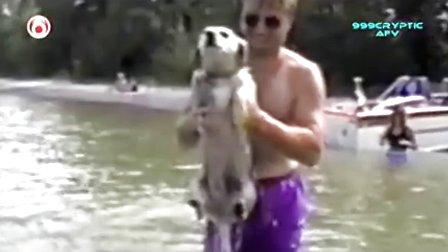 美国最搞笑录像 America_s Funniest Home Videos 665 动物
