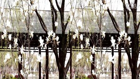 李村公园风光(左右) 青岛3D婚礼—在线播放—优酷网,视频高清在线观看