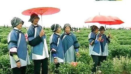 品读永州 神州瑶都之以茶会友牛轱岭首届茶文化节