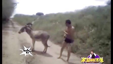 视频封面:人驴大战 都是功夫好手!