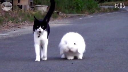 亲着猫咪的情侣头像