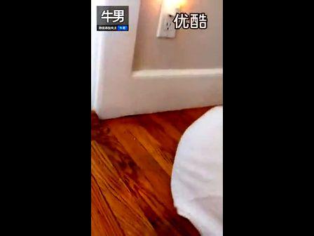 搞笑小狗被困枕幽灵变头套_高清-3023视频-的视频wo图片