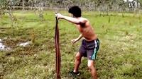 利用蛇徒手捉野兔