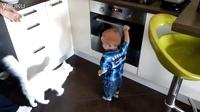 为了不让小主人碰烤箱, 喵星人真是操碎了心