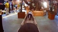 长崎生物公园为豚鼠做的吊桥