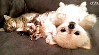 醒来后怕吵醒小喵们而一直保持不动的汪星人。。