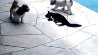 史上最屈辱的两条狗。。二打一还被躺着的喵反杀了