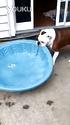 一只喜欢玩水的狗狗。。。