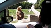 吃货熊非常敷衍地打招呼,扔块面包态度秒变