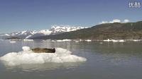 哈哈哈!在冰面上晒太阳的海豹被人类给吓到了。。。