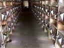 肉兔养殖肉兔养殖技术养殖肉兔养殖肉兔视频养兔场创业致富热线:400-0707-052