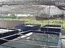 致富经典:视频泥鳅养殖泥鳅养殖技术泥鳅养殖技术视频