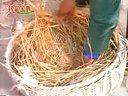 养鹅技术视频鸽子养殖视频(加2820054988)(鹅的饲养管理)