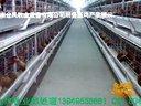 层叠蛋鸡自动化养鸡设备/鸡笼/蛋鸡笼/育雏笼/肉鸡笼/喂料/捡蛋