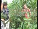 邓州市春伟核桃苗种植核桃嫁接核桃果园核桃树培训课程2视频
