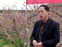 桃树病虫害防治与丰产种植管理技术视频