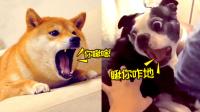 蠢萌動物的表情包大賽 19