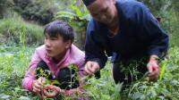 農村小哥傍晚和母親到山上摘辣椒, 這樣的母子的生活羨慕啊