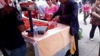云南又一怪 番茄櫻桃四季賣13857975994