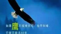 勵志視頻 鷹之重生 片段 你誤到了什么