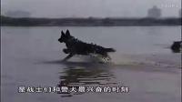 英國老式牧羊犬訓練視頻-牛頭梗喜歡打架嗎
