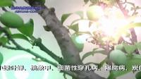 李子树病虫草害解决方案——爱华植保