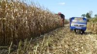 玉米收割機5